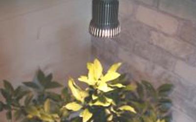 Odlingslampa2