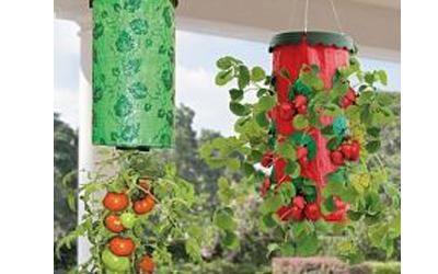 hängande odling