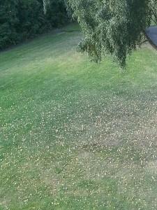 löv på mark